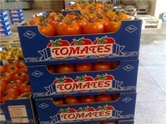 tomates-maroc.jpg